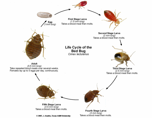 bblifecycle